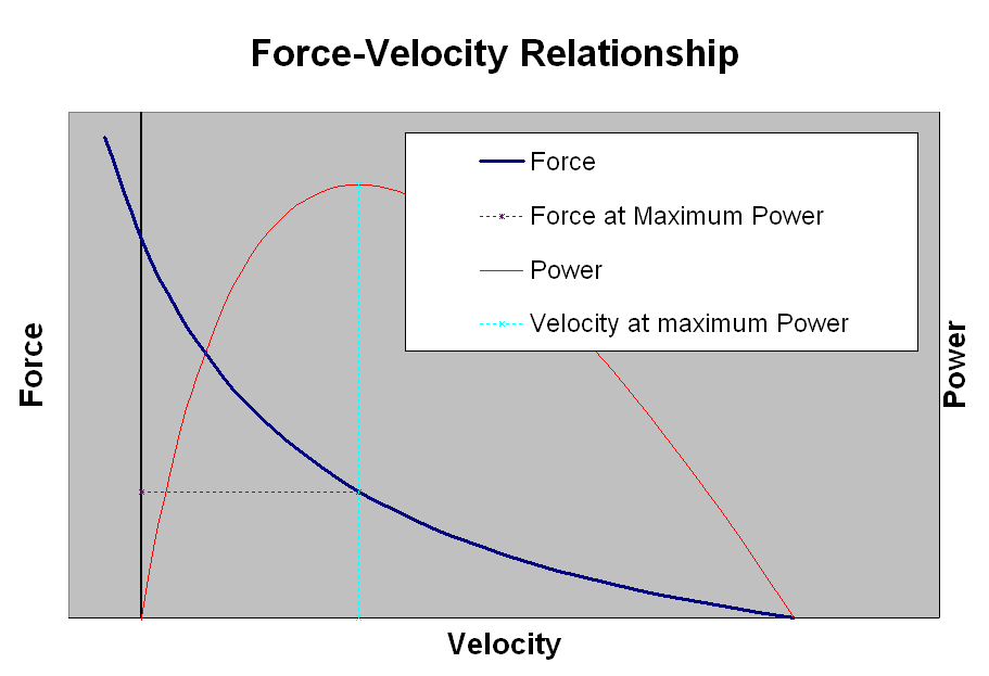 20110110024047muscle_force_velocity_relationship.png